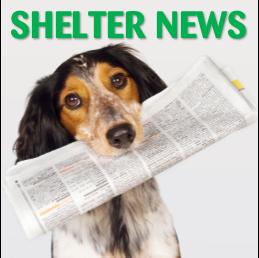 Shelter News
