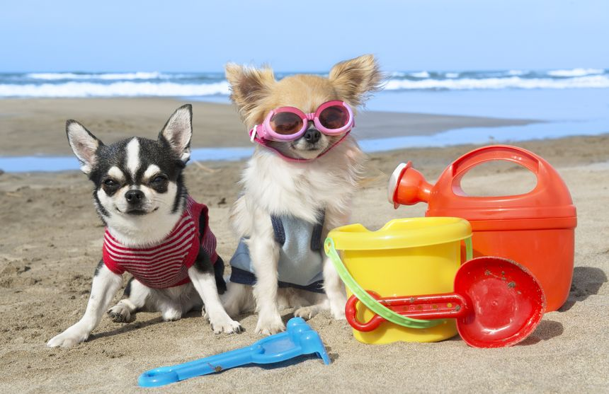 Exercise For Dogs In Hot Weather
