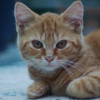CAT POD 11