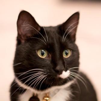 CAT POD 2