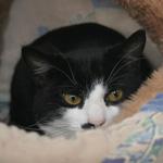 CAT POD 3