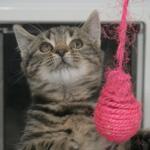CAT POD 4