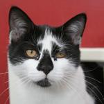 CAT POD 6