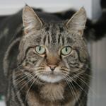 CAT POD 8