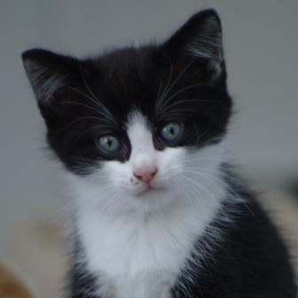 CAT POD 9