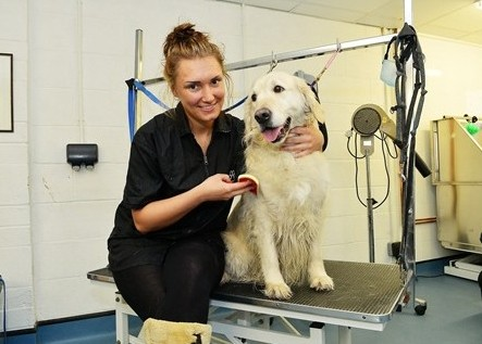 Dog Grooming Cheltenham Animal Shelter