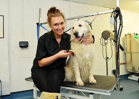 Dog Grooming Parlour Cheltenham