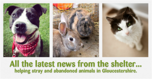 shelter_life_news