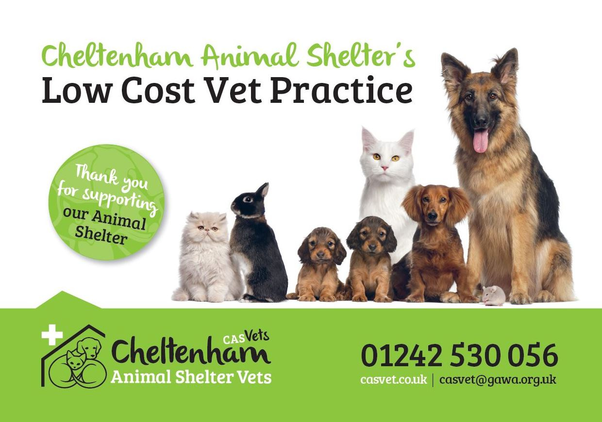 free cat neutering cheltenham animal shelter