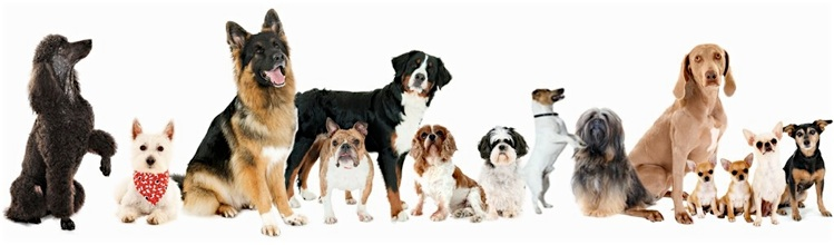 Dog Training Classes Chelmsford