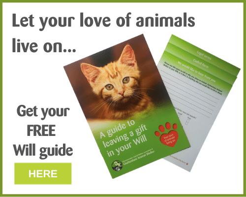 Welcome To Cheltenham Animal Shelter